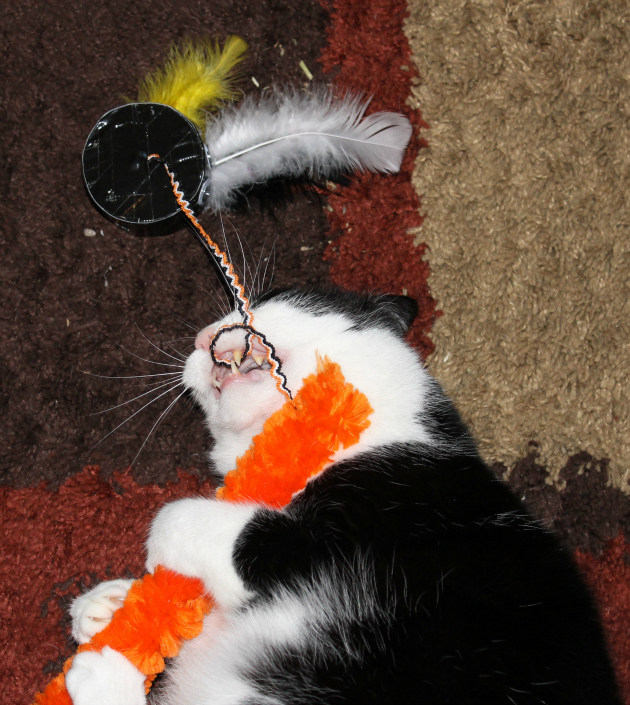 Halloween Inspired DIY Homemade Cat Toy hazel feathers