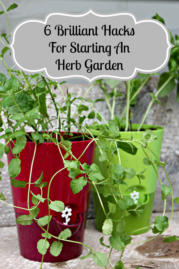 6 Brilliant Hacks For Starting An Herb Garden Kicking It With Kelly
