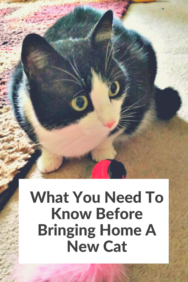 What you need to know before bringing home a new cat for I need a new home