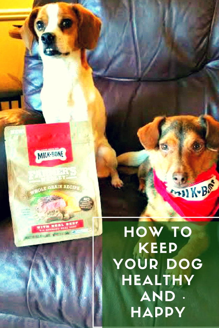 Do you have a dog at home? We have Elvis and Ringo and they are the loves of our lives! Here are our tips on How To Keep Your Dog Healthy And Happy #ad #milkbone #nationaldogbiscuitday
