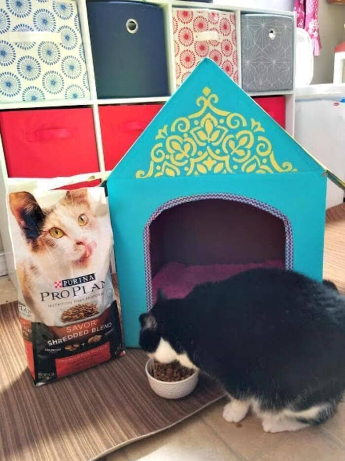 DIY Cardboard Cat House hazel house