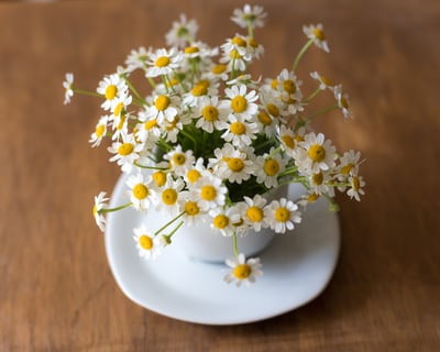 Essential Oils for Anxiety and Depression chamomile