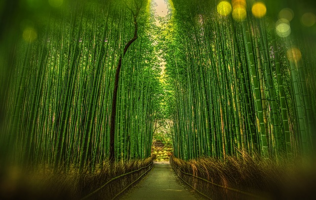 Top Honeymoon Locations For All Tastes kyoto bamboo forest