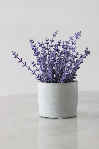 Essential Oils for Anxiety and Depression lavender